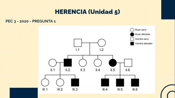 Arboles genealógicos